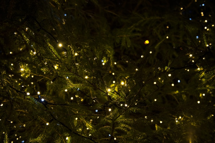 Christmas lights hanging in a tree.